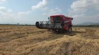 (Özel)  Dünyaca Ünlü Baldo Pirincinde Hasat Zamanı