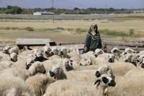 Genç Çiftçi Projeleri Tarıma Işık Tutuyor