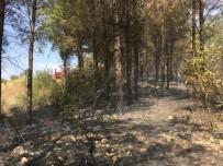 Osmaniye'deki Orman Yangını Büyümeden Söndürüldü