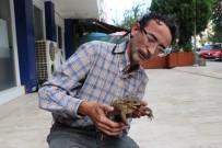 ORMANA - (Özel) Yaralı Kurbağayı Tedavi Ettirmek İçin 27 Kilometre Yol Katetti