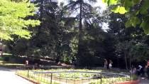 Türkiye'nin İlk Arboretumu 89 Yaşında