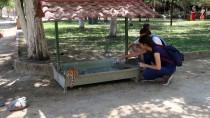 Yaz Tatillerinde Sokak Hayvanlarını Beslediler