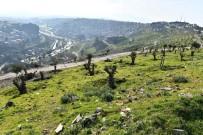 KAMULAŞTIRMA - Kale'de Yeşil Seferberlik