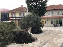 KONURALP - Akyazı'da Fırtına Hayatı Olumsuz Etkiledi