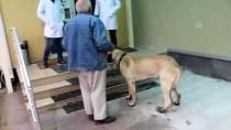 'Kocabaş'a Üç Boyutlu Protez Takıldı