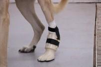 'Kocabaş' Protez Bacakla Yeniden Yürüdü