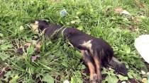 BULDUK - Edirne'de 8 Köpek Ve 1 Kedi Telef Oldu