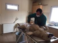 Erzincan Belediyesi Sokak Hayvanlarına Sahip Çıkıyor