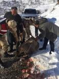 Jandarma Yaralı Dağ Keçisini Battaniyeye Sardı