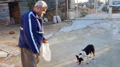 Kafası Bidona Sıkışan Köpeği Yanlışlıkla Girdiği Evin Sahibi Kurtardı