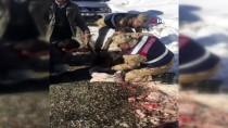 Yaralı Dağ Keçisini Jandarma Kurtardı
