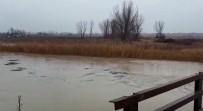 Ergene Nehri'nin Su Seviyesi Yükseldi, Vatandaşlar Tedirgin