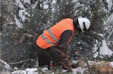 Orman Köylüleri, Eksi 5 Derede Ekmek Mücadelesi Veriyor