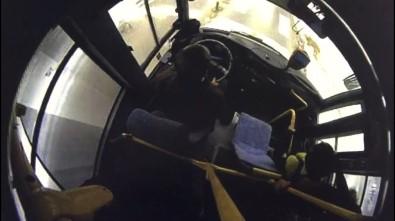 Şoförün, Yaya Geçidinde Bekleyen Köpeğe Yol Vermesi Kameralara Yansıdı