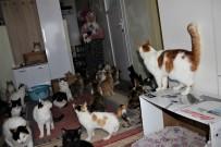 Bir Evde Tam 58 Kedi