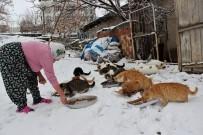 Nuriye Teyze Kış Nedeniyle 58 Kediye Evinde Bakıyor
