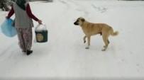 (ÖZEL) - Sokak Hayvanları Ölmesin Diye Yemeklerinin Yarısını Paylaşıyorlar
