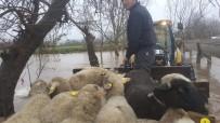 Sel Baskınında Mahsur Kalan Koyun Ve Köpekler Kepçe İle Kurtarıldı