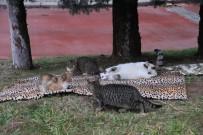 Öğrencilerden Sokak Hayvanlarına Battaniye Yardımı
