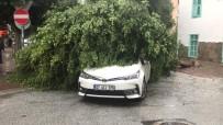 ŞİDDETLİ YAĞIŞ - Alanya'da Fırtınada Ağaçlar Devrildi, Çatılar Uçtu