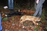 KIŞ MEVSİMİ - Sakarya'da Yol Kenarında 3 Köpek Ölü Olarak Bulundu