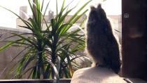YENIKÖY - Yaralı Flamingo Ve Yavru Baykuşa Evinde Bakıyor