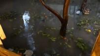 SAĞANAK YAĞIŞ - Adana'da evleri su bastı