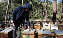 YERKESIK - Arıcılar Çareyi Kovanları Zincirlemekte Buldu