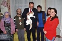 Evinde 58 Kediye Bakan Nuriye Teyzeye, Vali Kaldırım'dan Destek