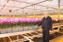 Hollanda'nın Gözünü Korkutan Tesis Yılda 1 Milyon 725 Bin Yerli Orkide Üretiyor