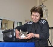ÖĞRETİM ÜYESİ - (ÖZEL) Diyabetli Kedisini Tedavi Ettirmek İçin Onlarca Kilometre Yol Kat Ediyor