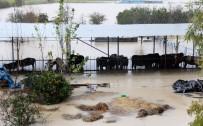 Sulama Kanalı Taştı, Çiftlikteki Hayvanlar Su İçinde Kaldı