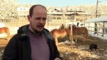 BOŞNAK - Uludağ'ın Karlı Eteklerinde Atla Gezinti Turizmi