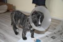 YAVRU KÖPEK - Yavru Köpek Kulakları Kesilmiş Halde Bulundu