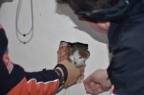 4 Gündür Asansör Boşluğunda Mahsur Kalan Kediyi AFAD Kurtardı