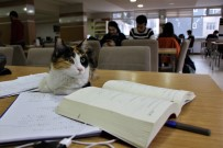 KÜTÜPHANE - Kediler Üniversitenin Kütüphanesine Sığındı
