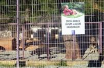 HAYVAN HAKLARı - Öğrencilerden Geçici Hayvan Bakım Merkezine Ziyaret
