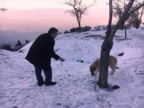 SOSYAL YARDIM - Şehzadeler Sokak Hayvanlarını Unutmadı