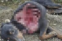 Sinop'ta Aç Kalan Kurtlar Köpeği Yedi