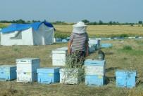 Trakya Ve Gezginci Arılar Arasında 5 Kilometrelik Tampon Bölge Olacak