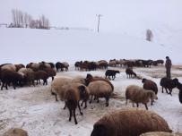 ÜNİVERSİTE ÖĞRENCİSİ - Zorlu Kış Şartlarında Hayvancılık