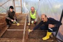 Mezitli Gönüllü Serası'nda Tohum Ekimi Yapıldı