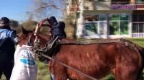 Sahipsiz At Arabasına Zabıta Müdahalesi
