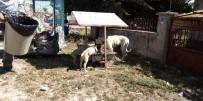 SOKAK HAYVANLARI - Aslanapa Belediyesi Hayvanlar İçin Beslenme Noktaları Yerleştirdi