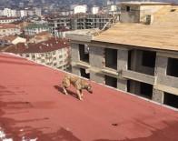 Çatıda Mahsur Kalan Köpek Kurtarıldı