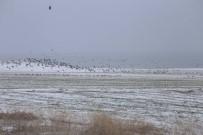 Elazığ'da Kış Ortası Kuş Sayımı Yapıldı