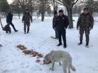 SOKAK HAYVANLARI - Sokak Hayvanlarına Polis Merhameti