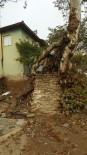 ÇINAR AĞACI - 610 Yıllık Çınar Ağacına Kurtarma Operasyonu