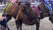KıRKPıNAR - 37. Selçuk Efes Deve Güreşi Festivali