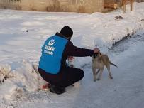 SOKAK HAYVANLARI - Ağrı'da Sokak Hayvanları Unutulmadı